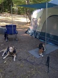 dog-tent